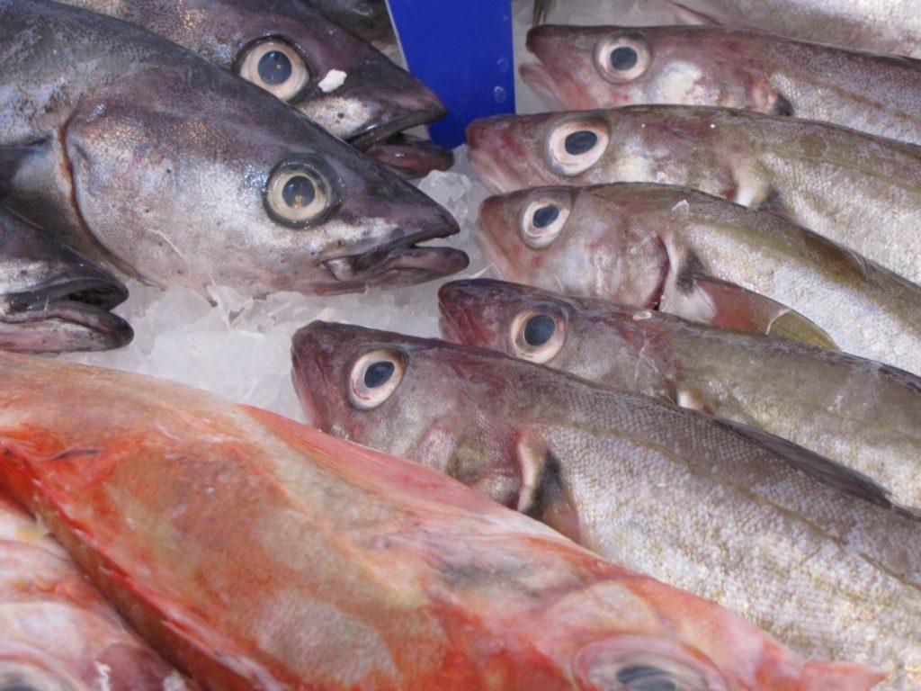 Fisch, Küchenfertiger Frischfisch
