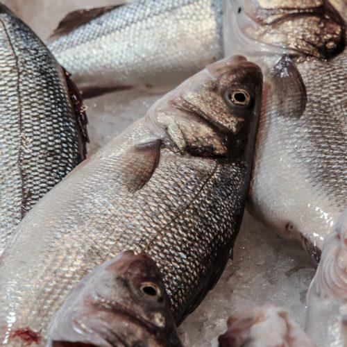 Frischfisch, einmal in der woche fisch essen